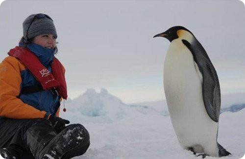 Pingüino emperador una especie amenazada
