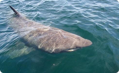 Baja la venta de aletas de tiburón en China