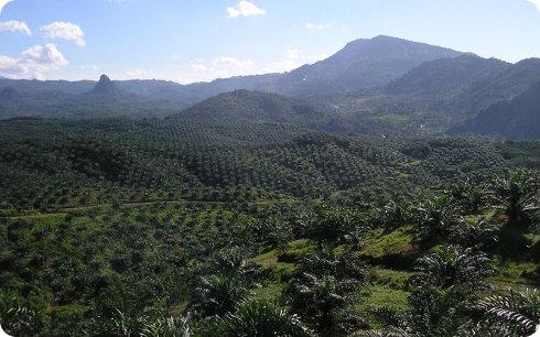 Un ambicioso plan para acabar con la deforestación