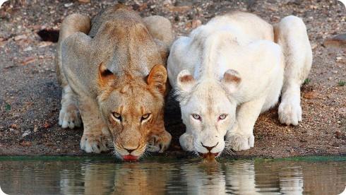 La población de animales es más pequeña que en 1970