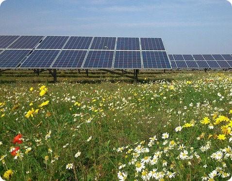 Será esta la granja solar más ecológica de todas