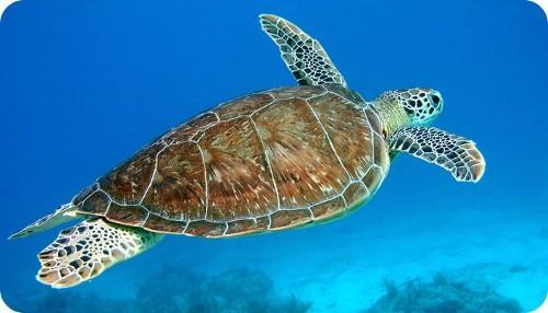 pequena-tortuga-robot-podra-surcar-los-mares