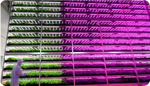granjas-urbanas-alimentadas-con-tecnologia-LED