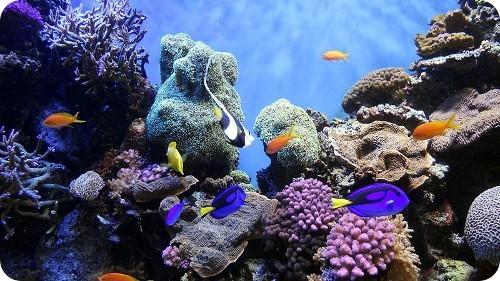 se-reduce-el-numero-de-especies-marinas-reconocidas-a-nivel-mundial