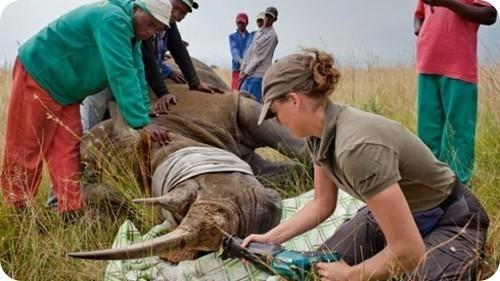se-inaugura-laboratorio-forense-en-kenia-para-ayudar-a-combatir-la-caza-ilegal-de-animales-en-peligro-de-extincion