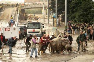 Georgia: una inundación hace que los animales escapen del zoológico