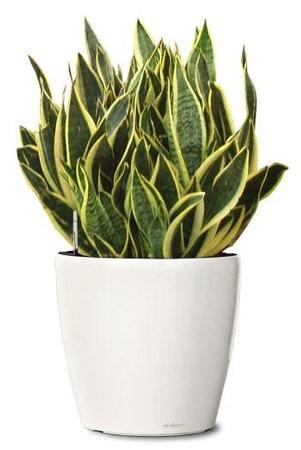 Las mejores plantas para purificar el aire en casa