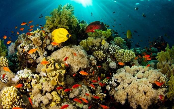 Corales en riesgo