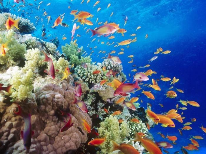Corales y la biodiversidad