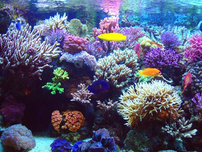 Corales en peligro