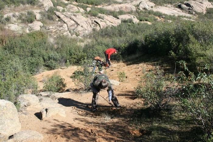 La Asociación Reforesta toma acciones en España