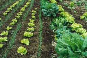 Agricultura orgánica ecológica en Ecuador