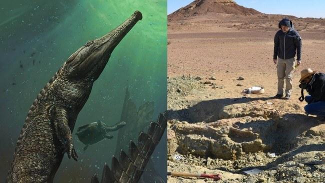 El cocodrilo mas grande que haya existido