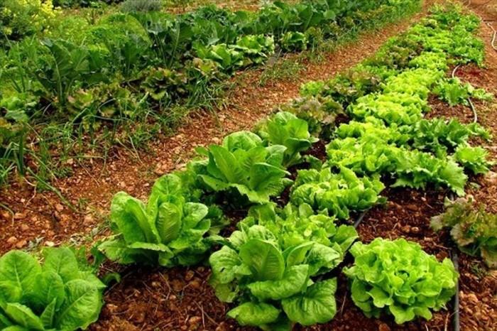 España: Plan estratégico para generar producción ecológica