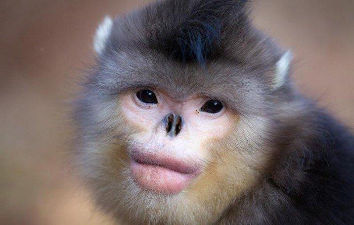 Top 10 de animales extraños - Parte 2