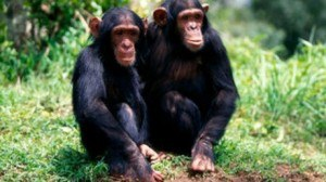 animales medicos