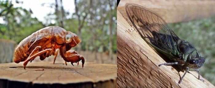 Top 10 de insectos más feos del mundo - Parte 1