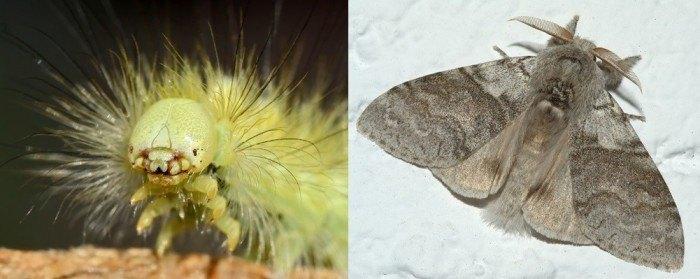 Top 10 de insectos más feos del mundo - Parte 2