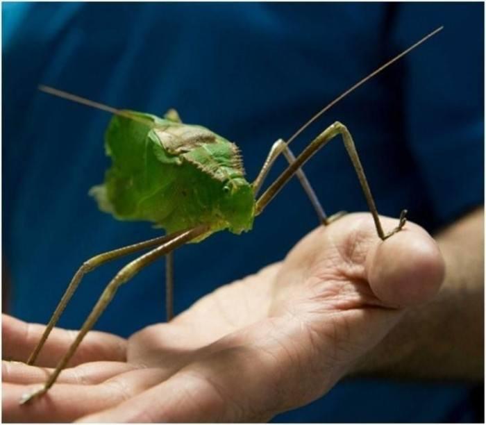 Top 10 de insectos más feos del mundo – Parte 3