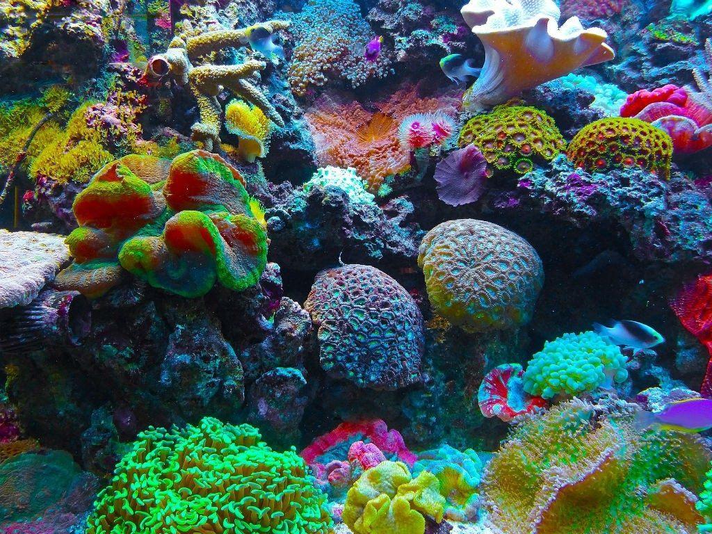arrecife de coral en la desembocadura del río Amazonas
