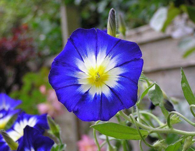 10 de las flores más lindas del mundo - Parte 1