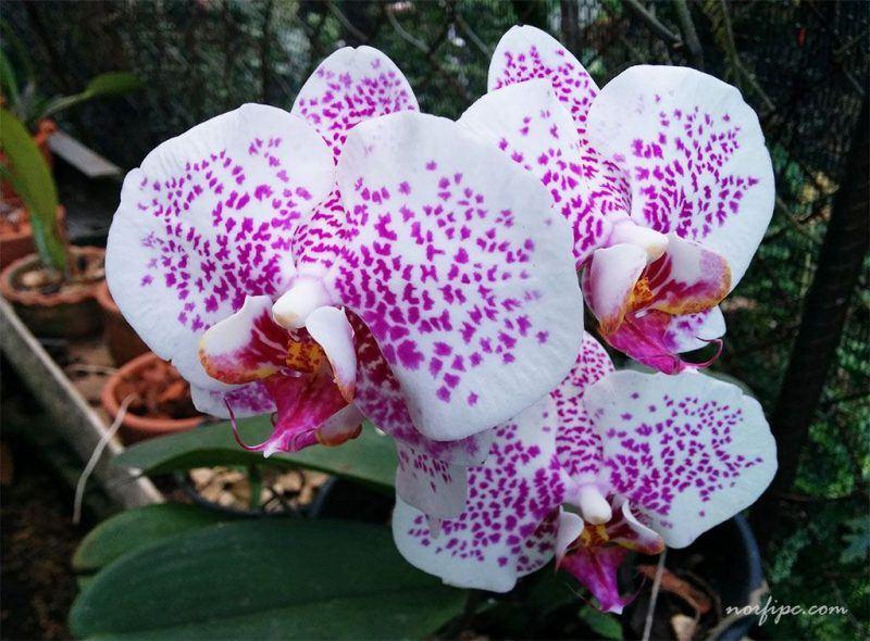 10 de las flores más lindas del mundo - Parte 2