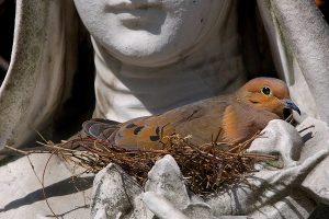 Las aves como un indicador de la salud de áreas urbanas
