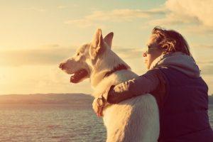 Holanda es ahora un país libre de perros callejeros