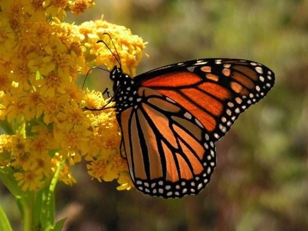 El cambio climático y su efecto sobre las mariposas y flores