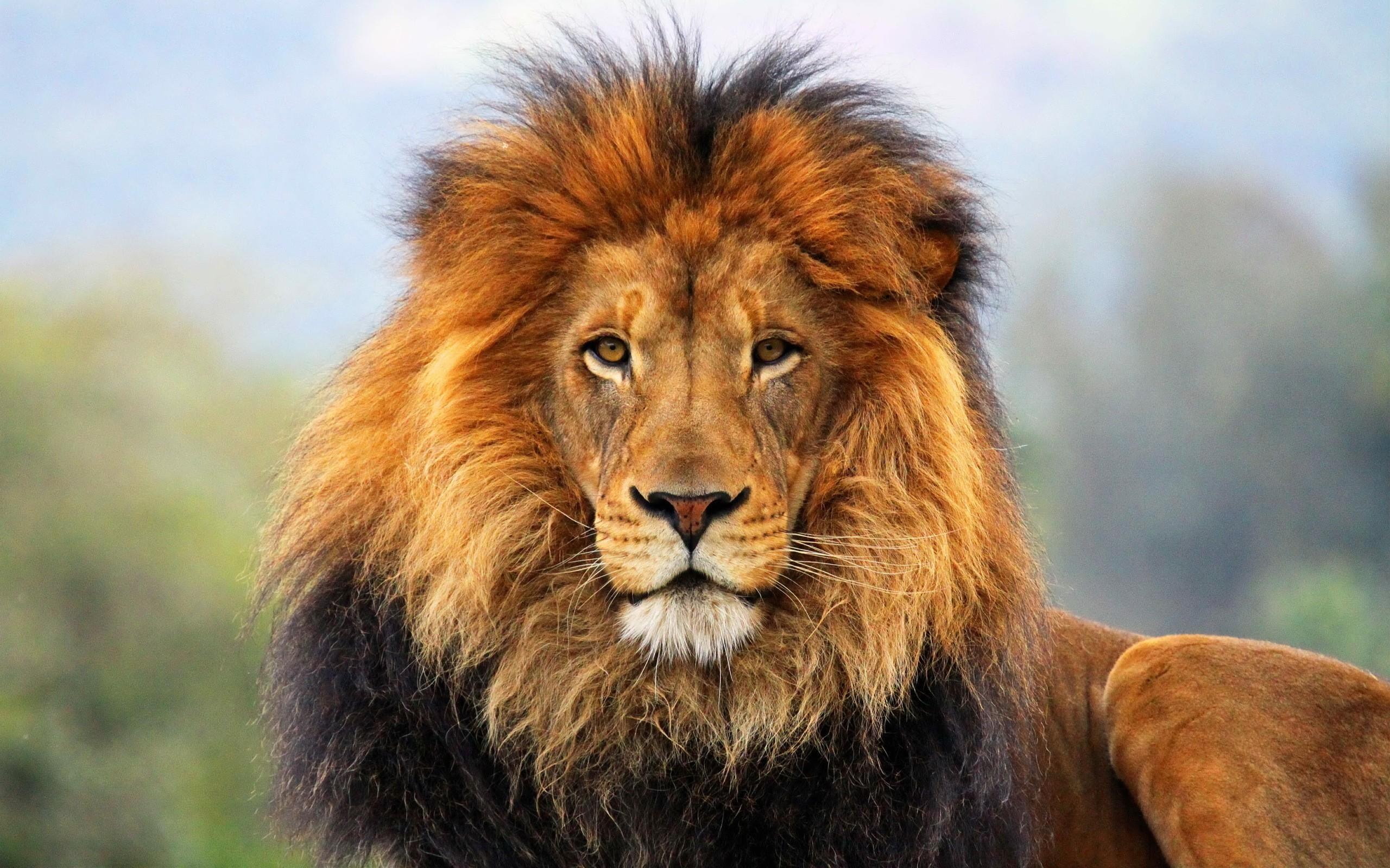 biodiversidad de los grandes animales