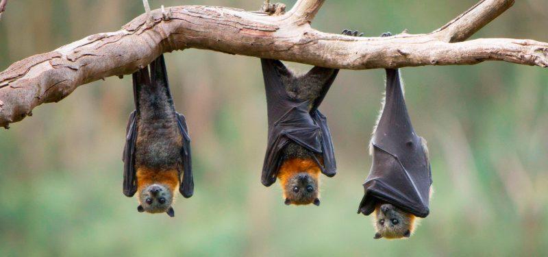 longevidad de algunos animales