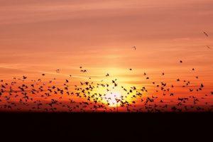 Lingang Bird Sanctuary