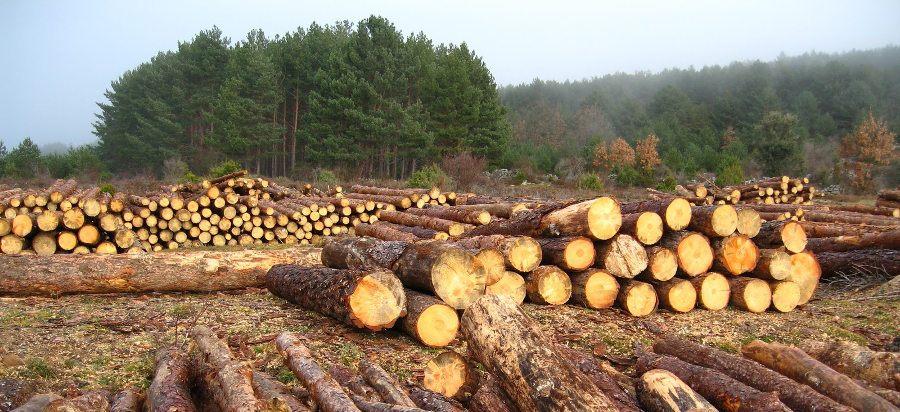 La industria maderera es una de las principales causas de la deforestacion