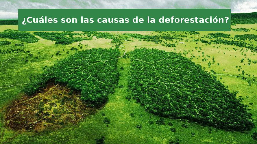 Causas de la deforestación de bosques y selvas