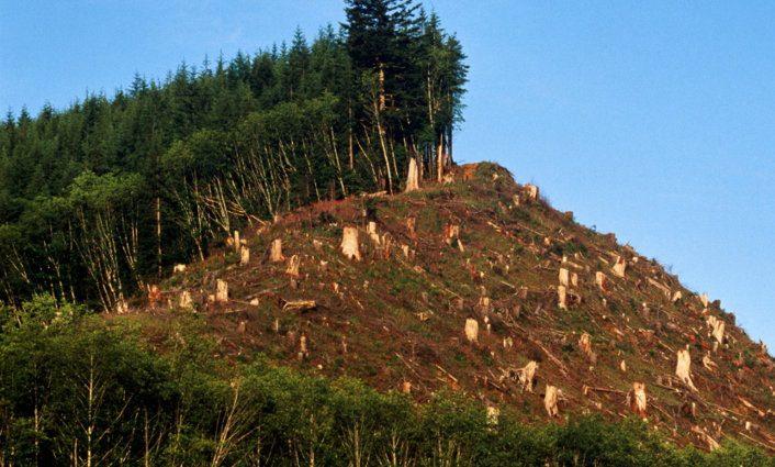 Cientos de especies animales y vegetales pierden la vida y su ecosistema como causa de la deforestación
