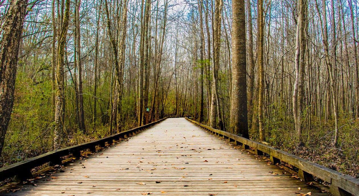 Fotografía de un Puente rodeado de la naturaleza que lo acecha
