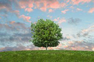 La inmensidad y belleza de un árbol parado en el horizonte con el atardecer de fondo