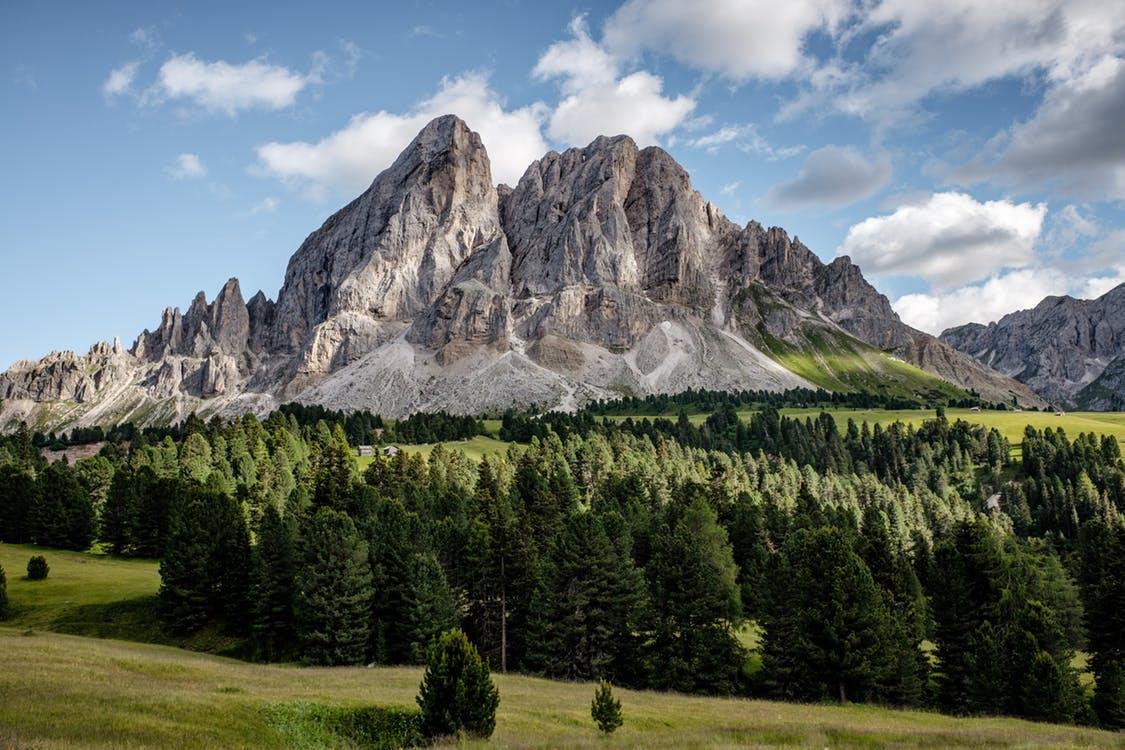 Montañas y verde pradera junto a bosques de pinos