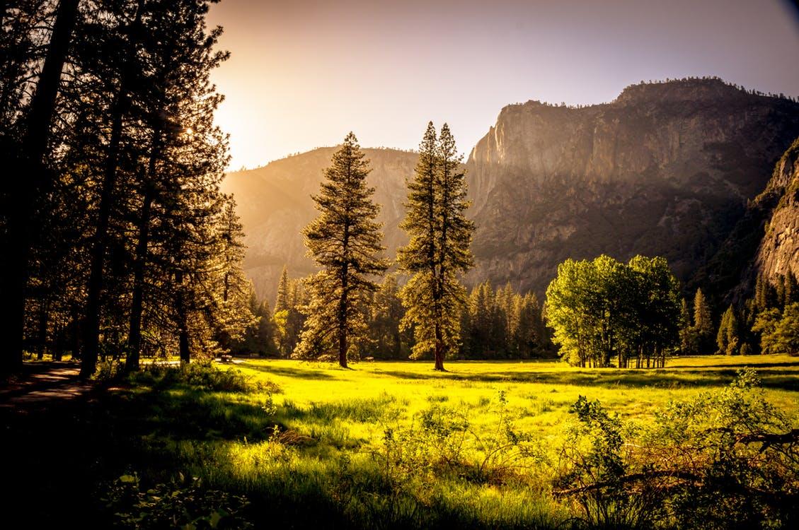 El sol ilumina el bosque de pinos junto a la pradera, la montaña mira en silencio el espectáculo