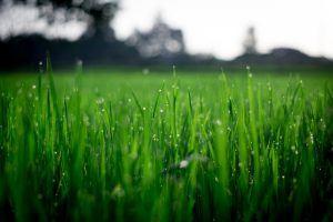 paisajes naturales - 17: justo después de llover vemos las gotas en el pasto