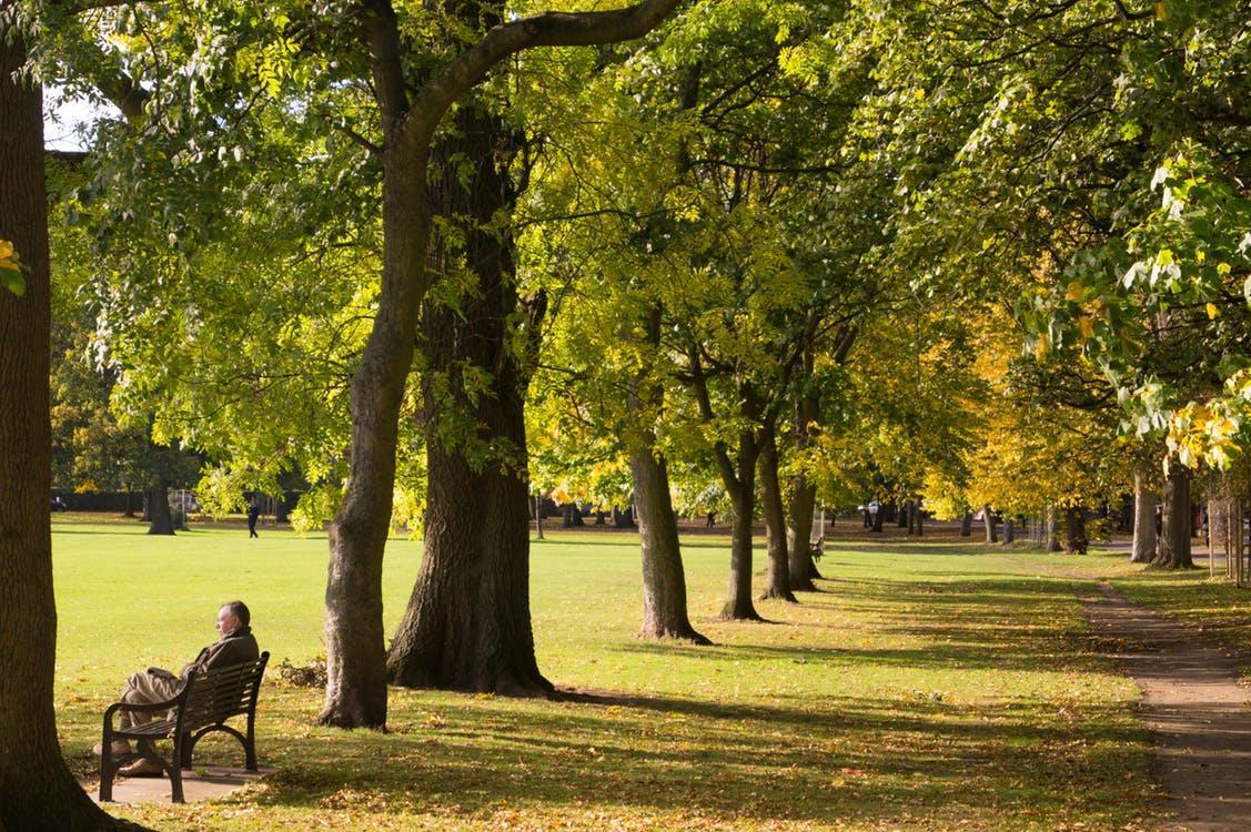 Paisaje natural de un parque, árboles verdes y una persona contemplando la belleza del momento