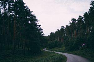 paisajes naturales - 19: la carretera en medio del bosque