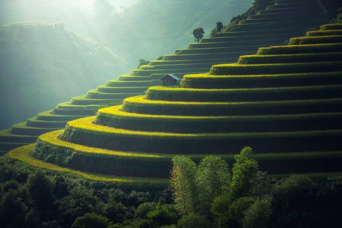 Foto de Cultivos en terrazas, imponente paisaje natural de nuestra querida Latinoamérica