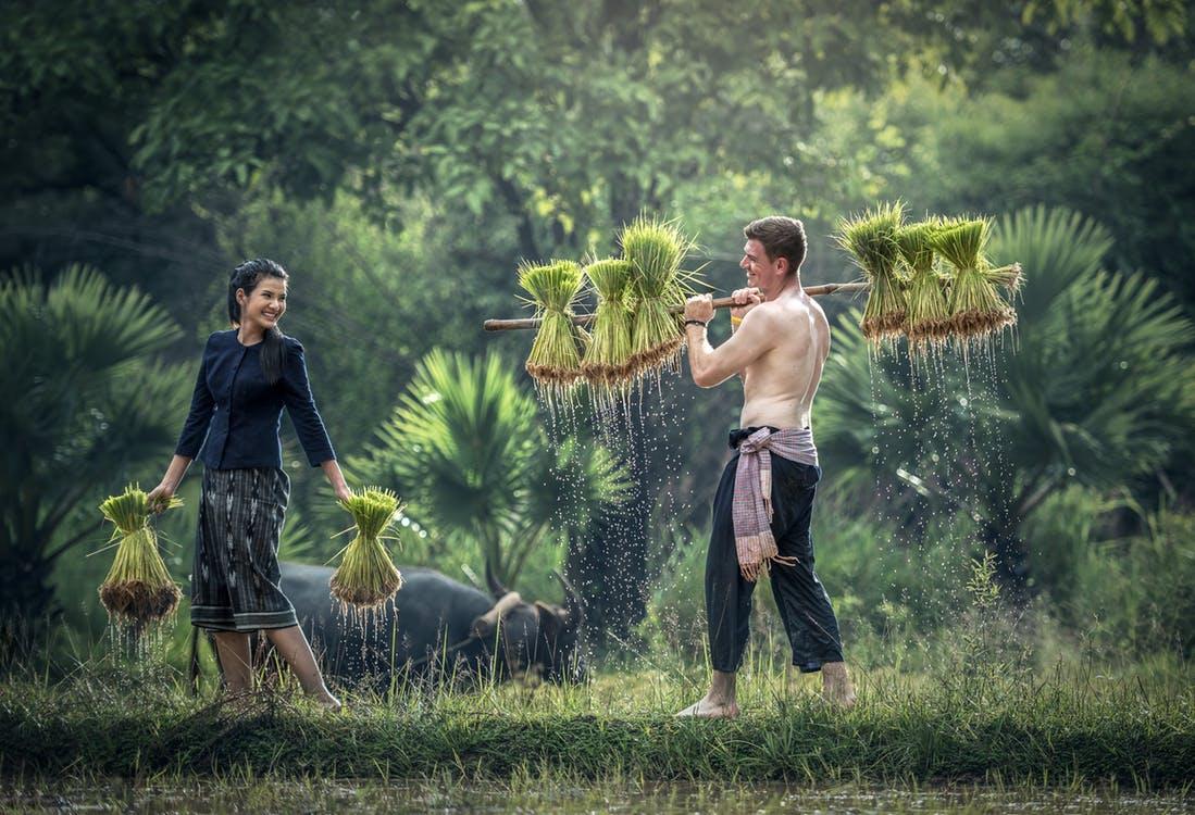 Personas trabajando en un cultivo, rodeados de naturaleza