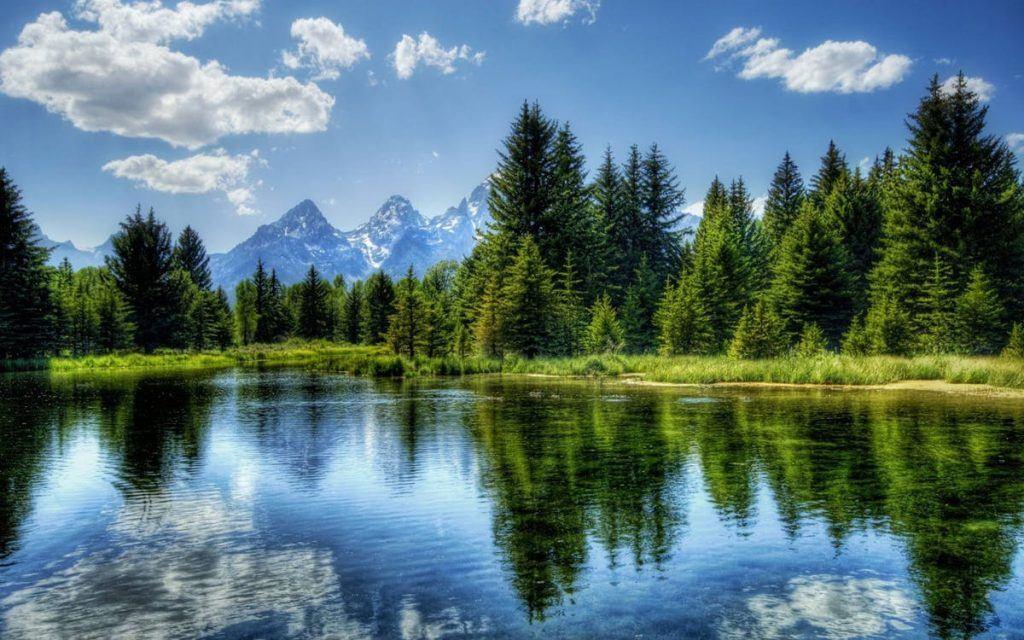 Bosque de pinos en Norteamérica, montañas nevadas atrás y un verde lago