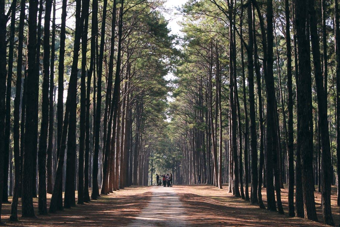 Imponente fotografía de paisaje natural con muchos árboles, un bosque rodeando a la gente que parece tan pequeña a su lado
