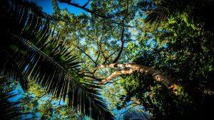 Árboles intentando que lleguen los rayos del sol a sus ramas, fotografía natural de una selva de Brasil