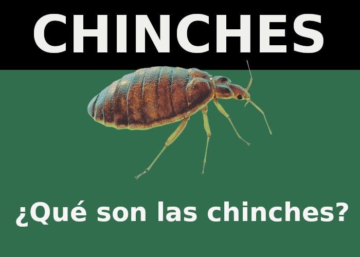 chinces